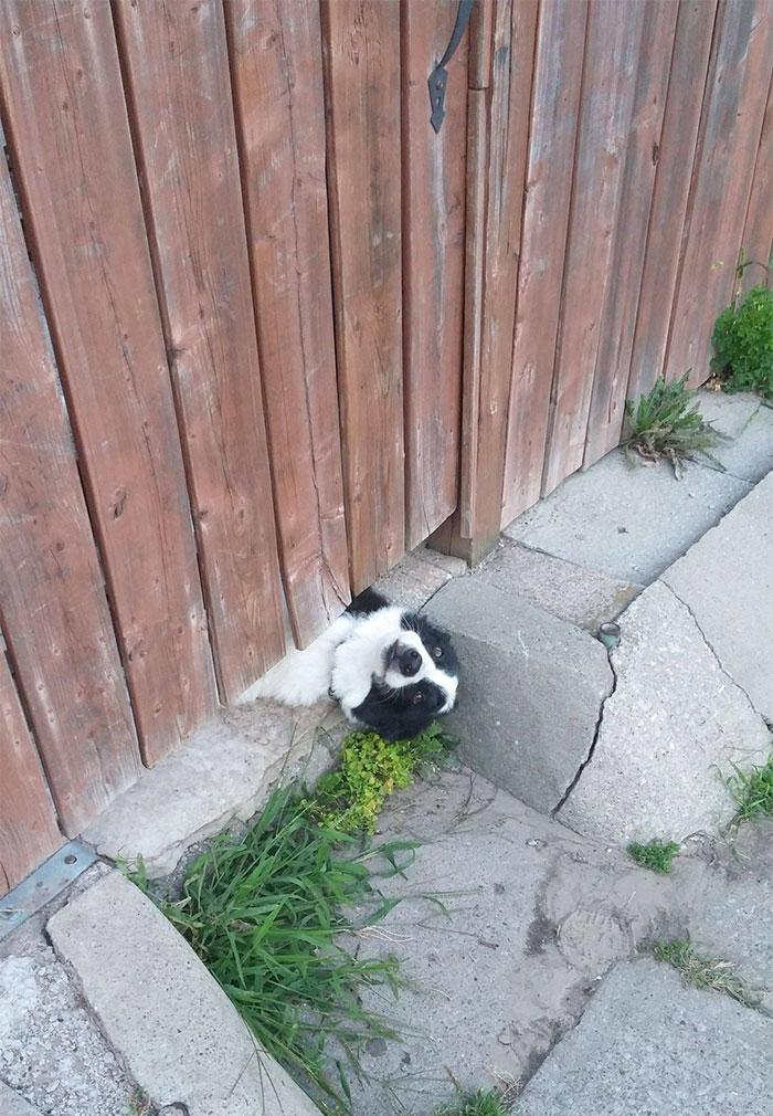 17 собак, которые ну очень хотят сказать «привет»