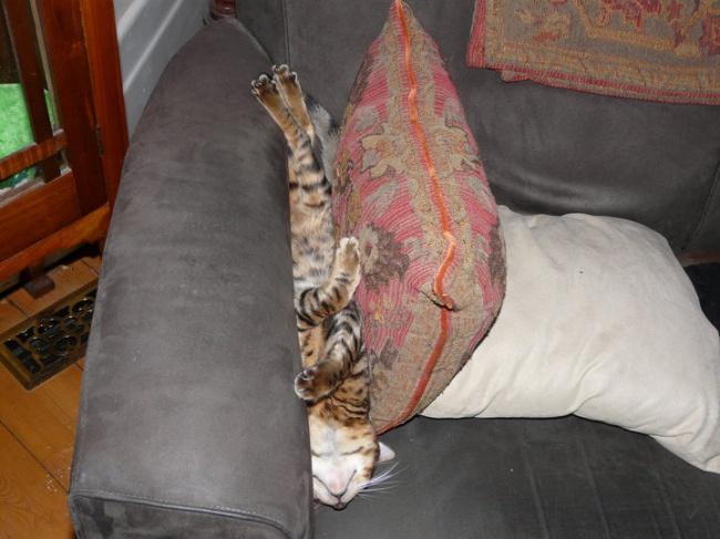 © imgur  Укаждого кота свое представление обудобстве.