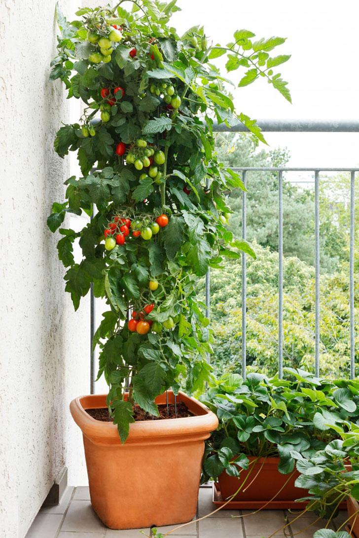 Крупные растения Крупное растение в кадке на балконе — отличный способ создать ощущение настоящего с