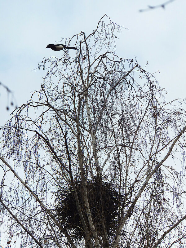 сорочье гнездо