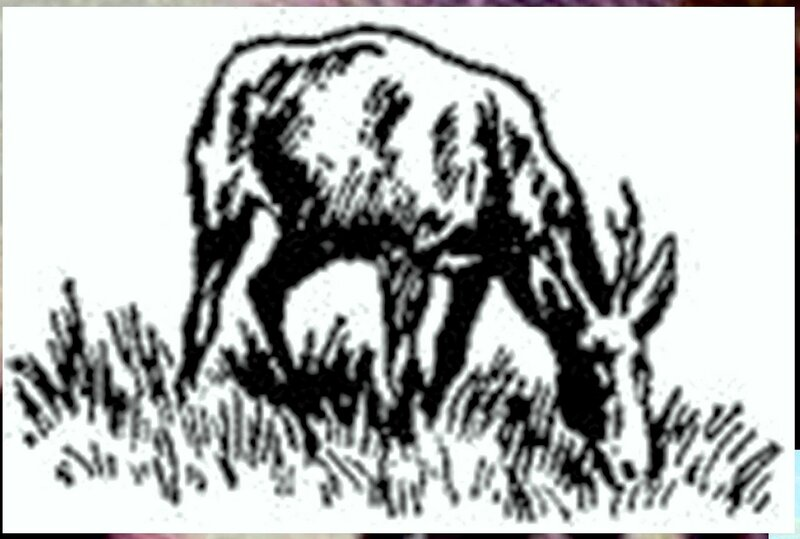 Иллюстрация к книге В.К.Арсеньева Дерсу Узала (5).jpg