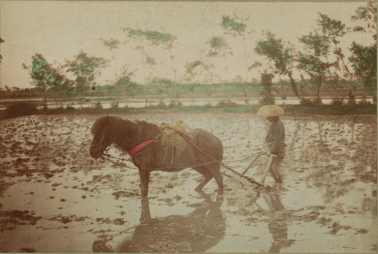 Вспашка рисового поля