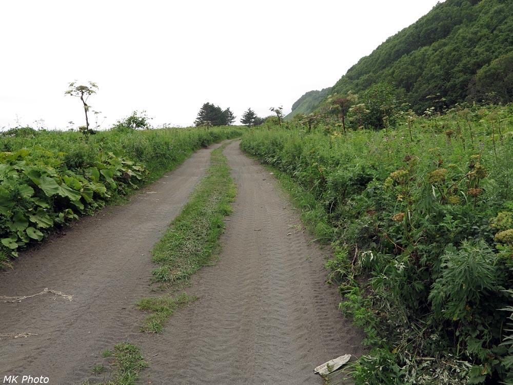 Дорога в травах
