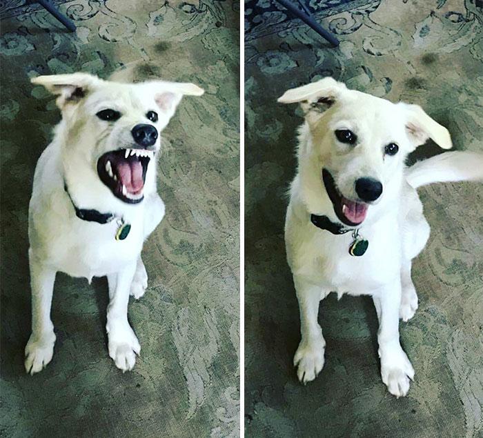 Животные До и После того, как их назвали «Хороший Мальчик»