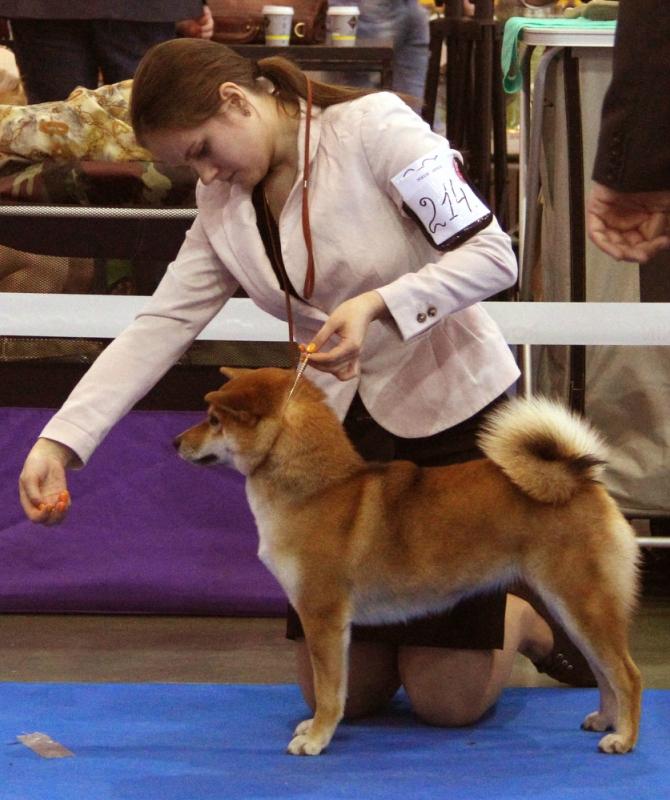 Акацуки Юри - Юный Чемпион Росии (2).jpg