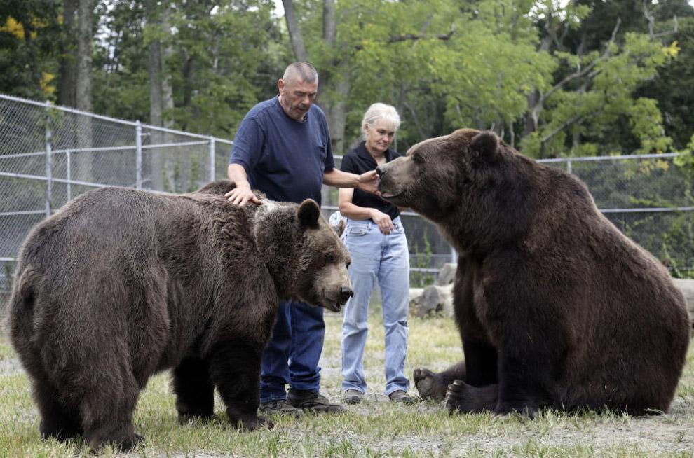 Это кадья?к — подвид бурых медведей, обитающий на острове Ка?дьяк и других островах Ка?дьякског