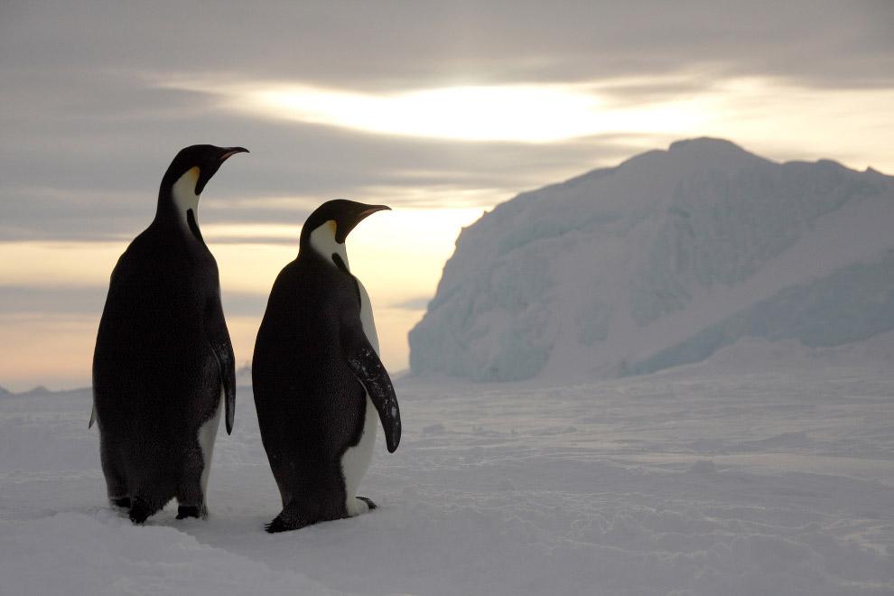 8. Правда, тогда их было значительно больше — в ходе эволюции вымерло не менее 40 видов, населя
