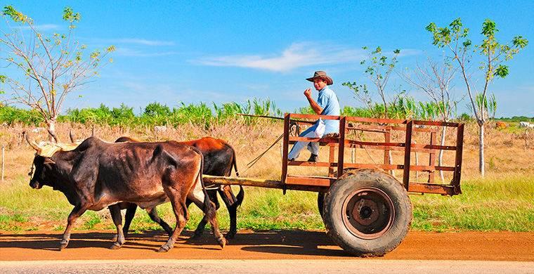 За убийство коровы на Кубе можно получить до 15 лет тюремного заключения. Тогда как убийца человека