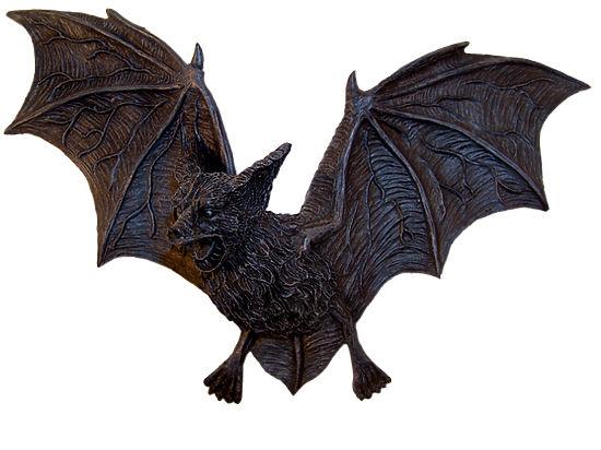 ВБразилии летучие мыши-вампиры начали нападать налюдей— Зоологи