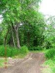 Камчатский лес..JPG