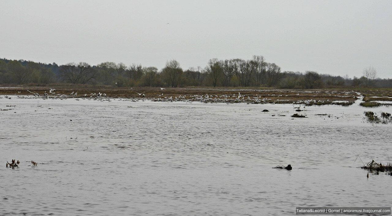 Птицы Беларуси весной