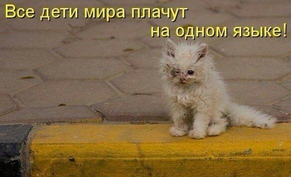 Грустные котики картинки до слез с надписями про людей