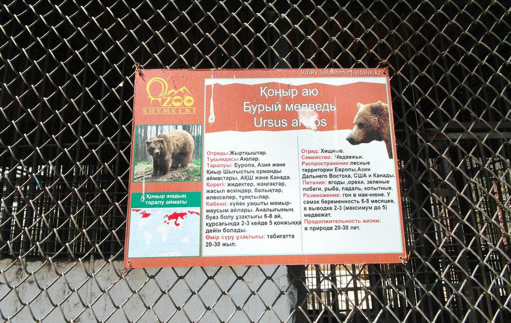 Табличка, бурые медведи в зоопарке Шымкента
