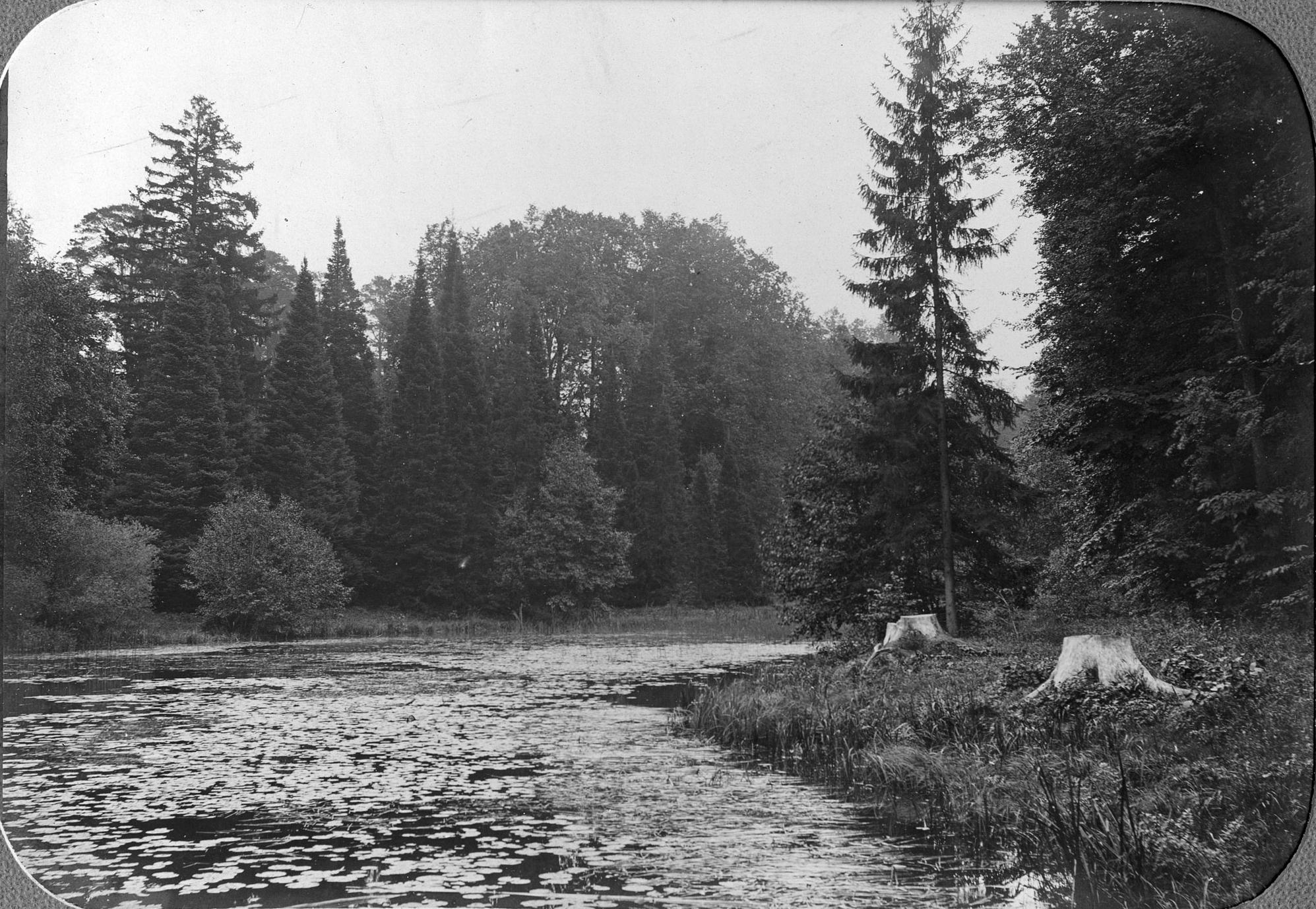 Уголок дендрария у Лилейного пруда