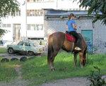 13 2009_09_06  16.37.48  Две рабочие лошадки.jpg