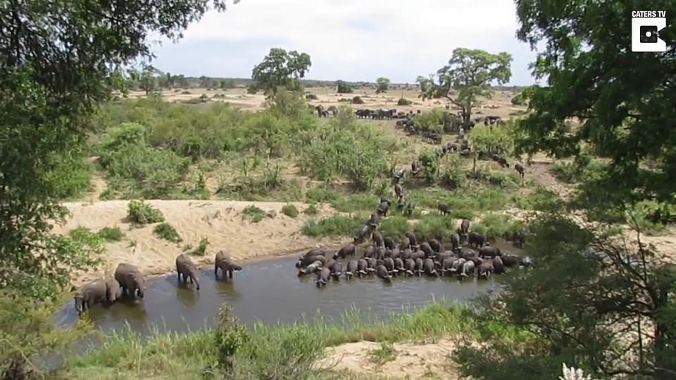 Впечатляющее зрелище: массовый поход на водопой африканских животных