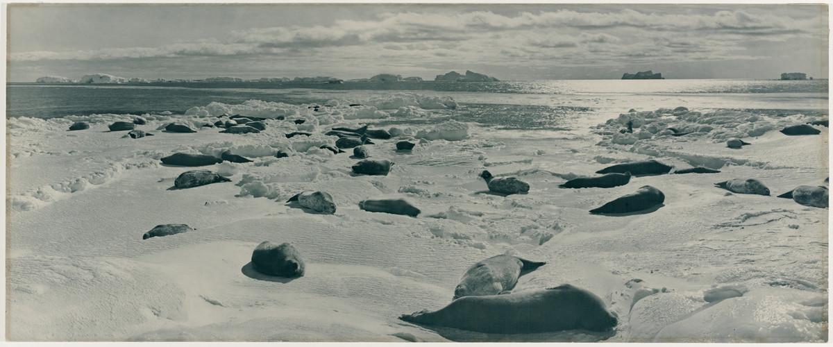 Первая Австралийская антарктическая экспедиция на снимках Фрэнка Хёрли (1911-1914)