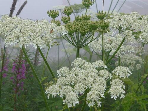 Луговые цветы в туманный день