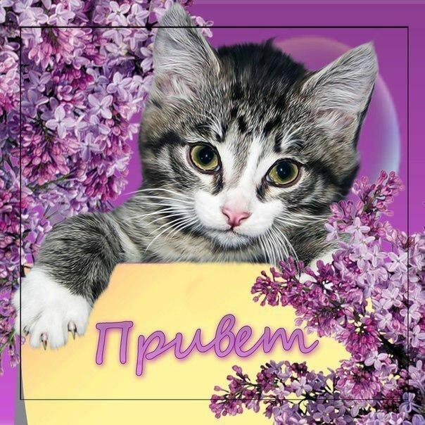 кошка открытка приветик гонок экстремальных условиях