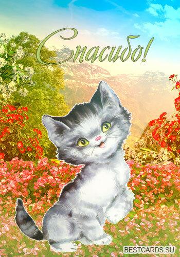 Картинки кошачье спасибо