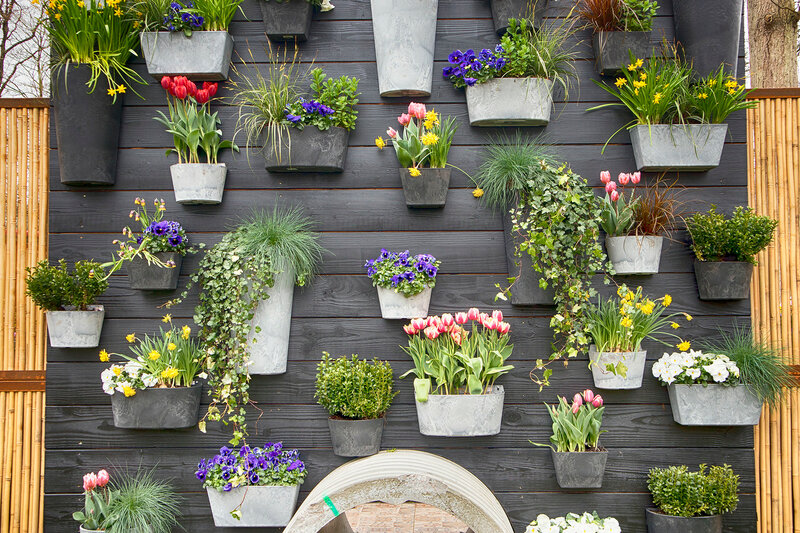 the Violets, ivy, chlorophytum, daffodils in pots adorn the decorative wall in the botanical garden