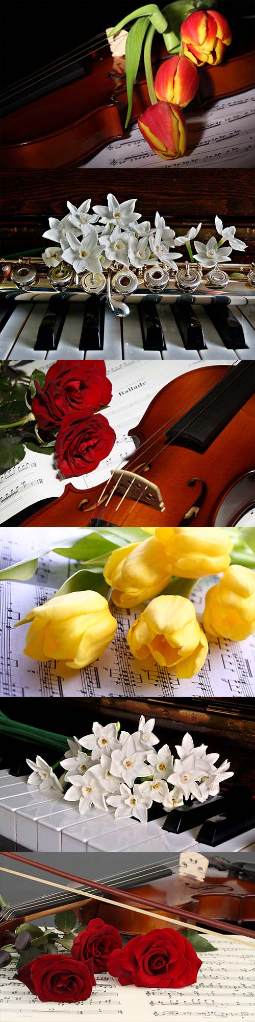 Flowers and music of the 90 photos
