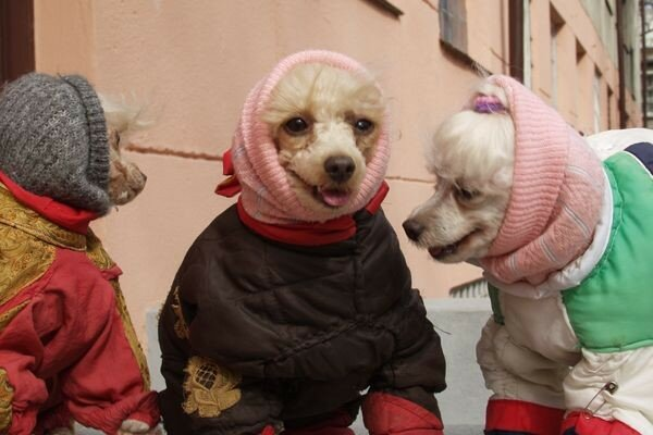 cold_dogs.jpg