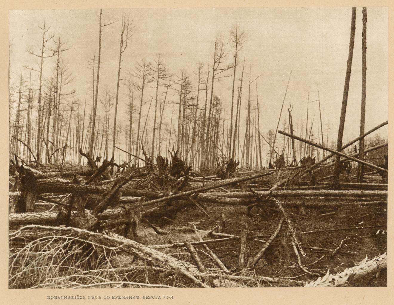 Верста 72. Повалившийся лес по времянке