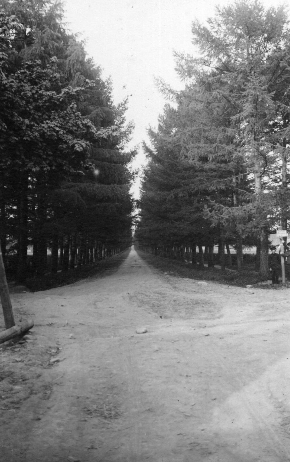 Въезд на Петровский проспект от ж.д станции