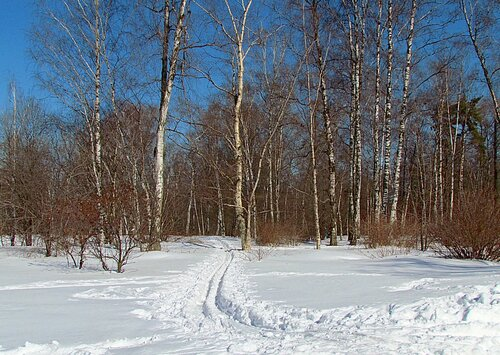 Весенняя лыжня