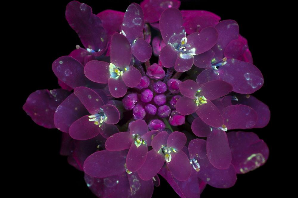 Светящиеся цветы на снимках Крейга Барроуза