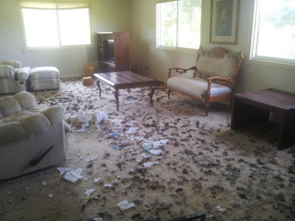 Дом, в котором проживала женщина с 40 кошками