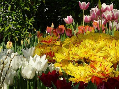 Репетиция Весны в Аптекарском огороде