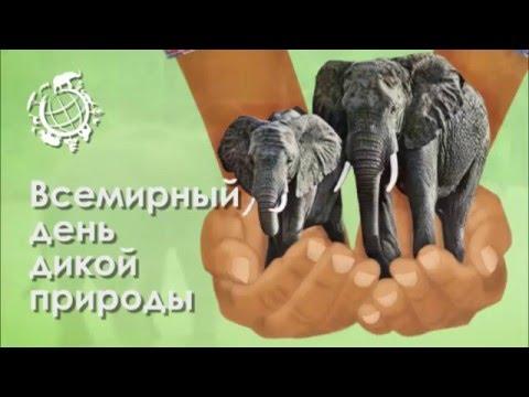 Открытки Всемирный день дикой природы. Слоны