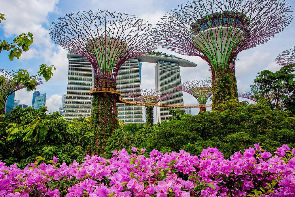 Гигантские деревья у залива.Футуристические сады Сингапура.