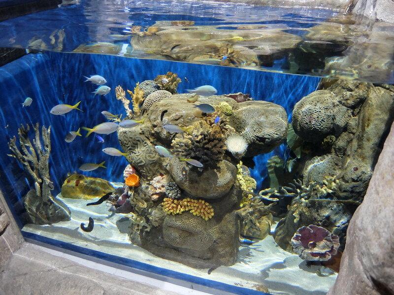 Гонконг - Oкеанический парк - Аквариум