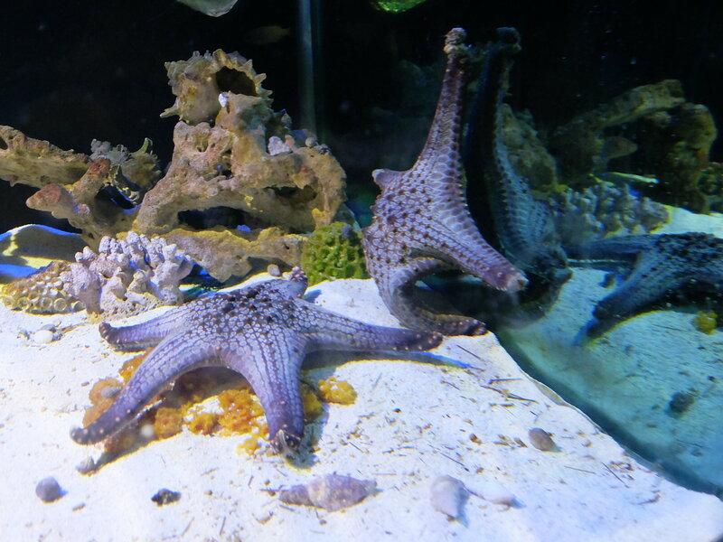 Чиангмай - Зоопарк - Морские звезды