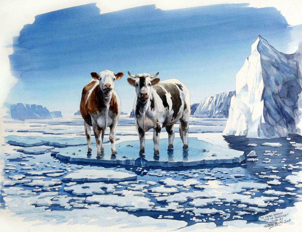 корова на льду фото