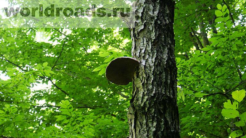 Горячий Ключ лес
