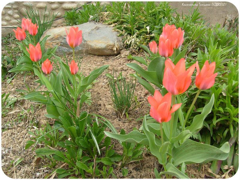 цветы, первоцветы, растения, лето