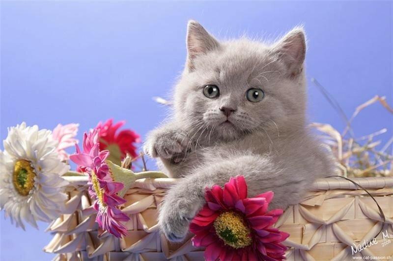 прикольные котята с пожеланиями хорошего дня его рисунки