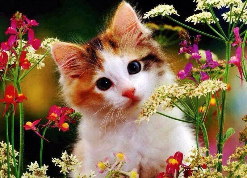 Открытки спасибо, красивые открытки кошках