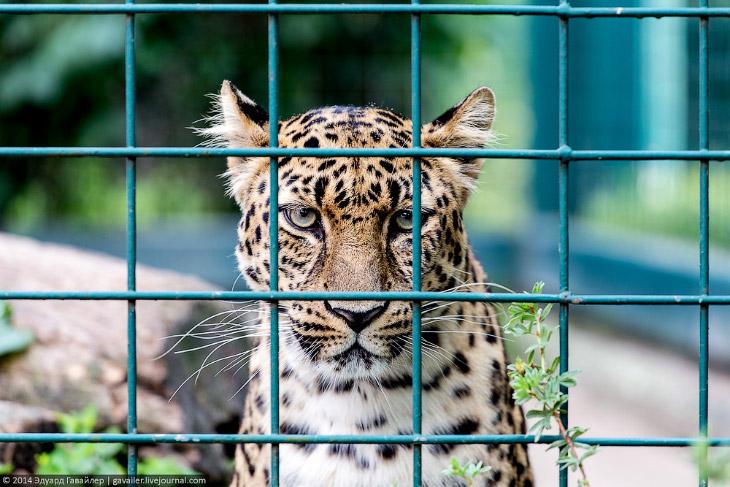 Крупнейший ландшафтный зоопарк в Европе (29 фото)