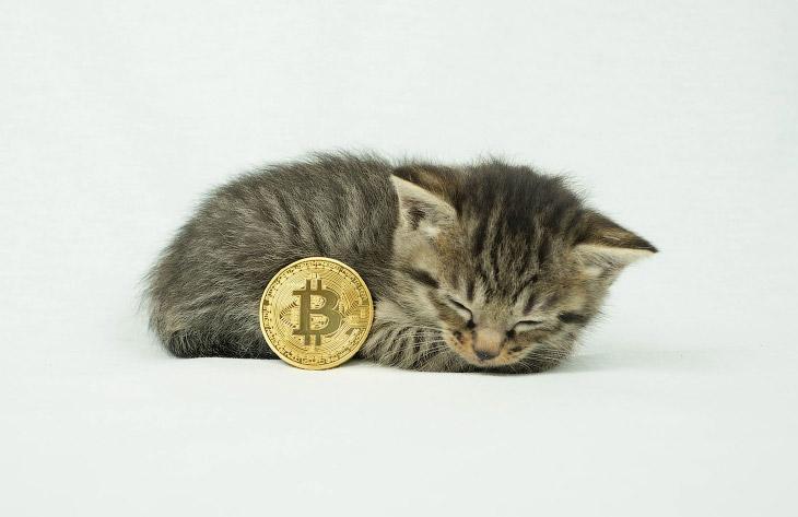 Биткойн-монеты (13 фото)