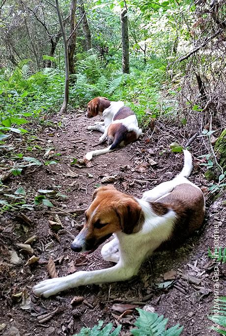собаки на тропе на гору Акун