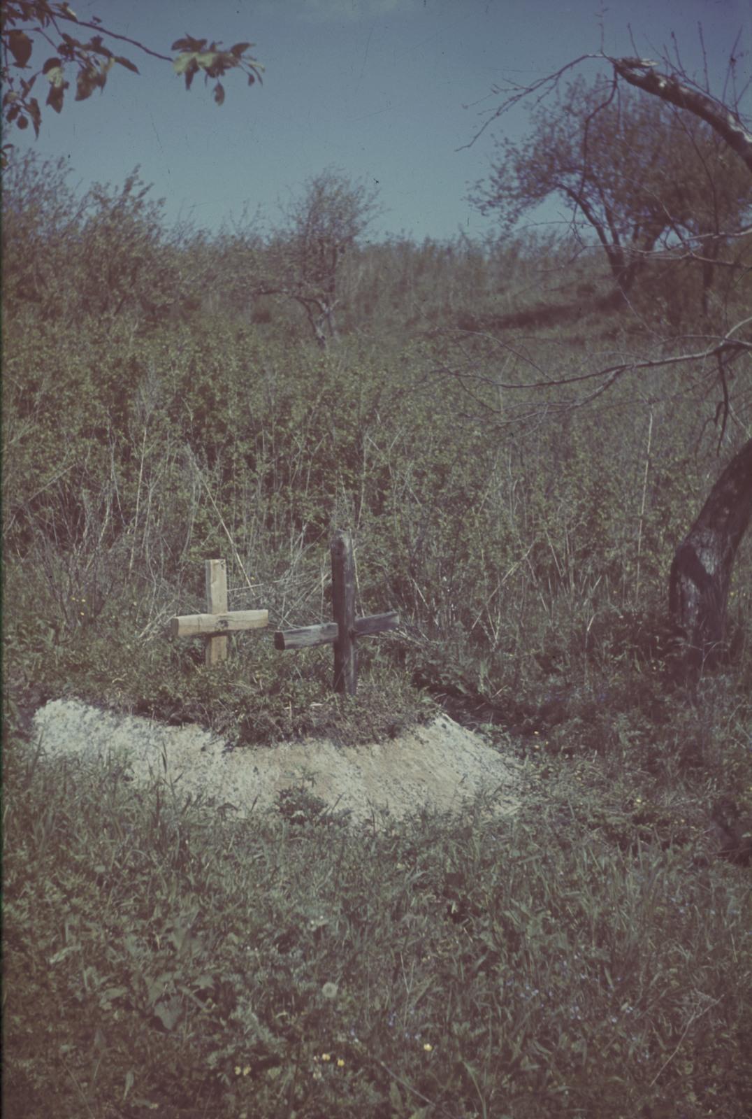 Двойная могила с двумя деревянными крестами возле дороги