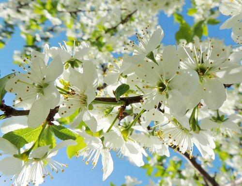 Весенний цвет, 1
