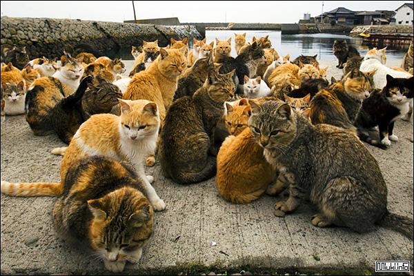 Аошима - кошачий остров в Японии