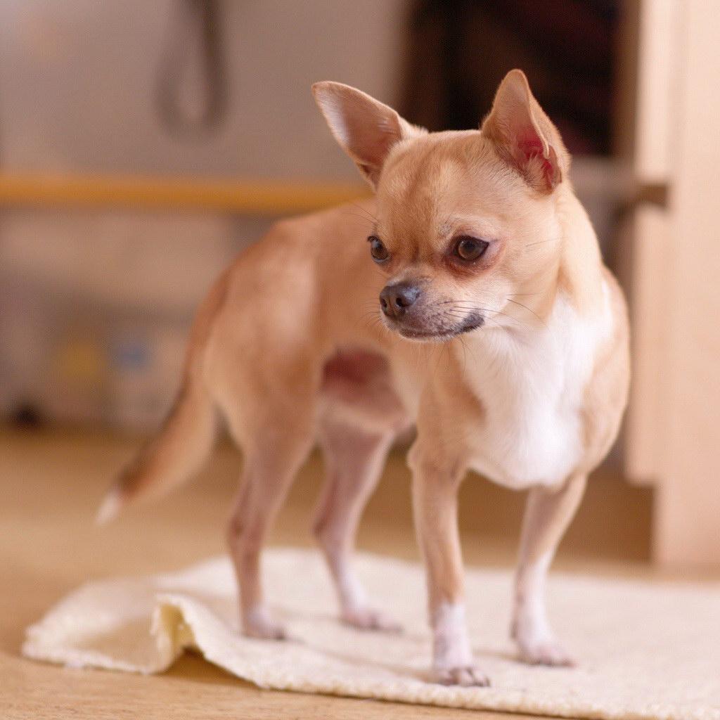 Маленька собачка