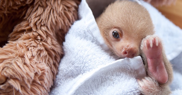 sloth-05.jpg